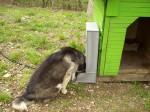 Кучешка Хранилка 3