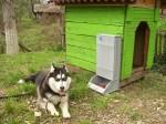 Кучешка Хранилка 2
