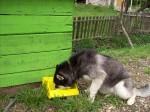Кучешка Поилка 2