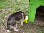 Кучешка Поилка 3